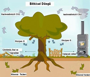 biyokutle_enerjisi1