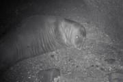 Termik santraller fokların hayatını tehdit ediyor