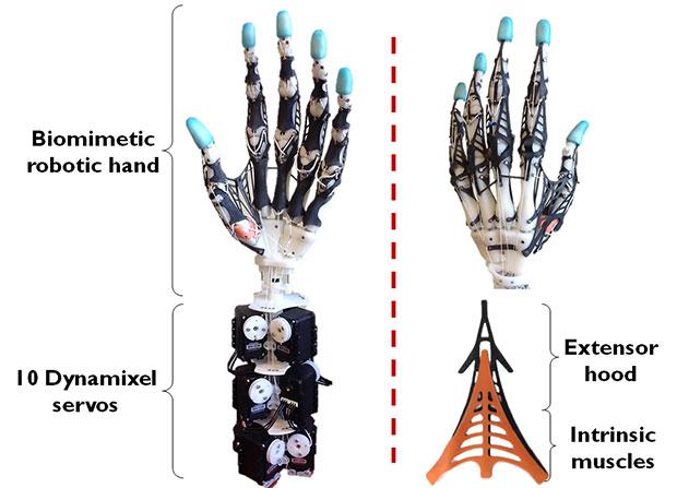 Anotamik robotik el yapısı